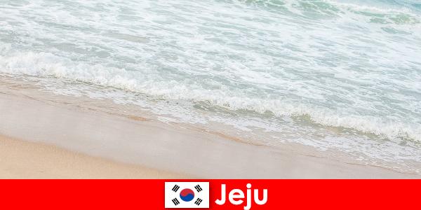 좋은 모래와 맑은 물이 있는 제주는 해변에서 가족 휴가를 즐기기에 이상적인 장소입니다.