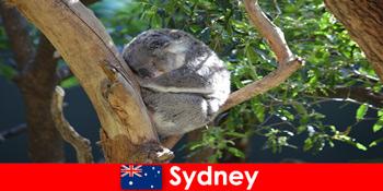 하룻밤 경험을 가진 이국적인 동물원에서 목적지 시드니 오스트레일리아