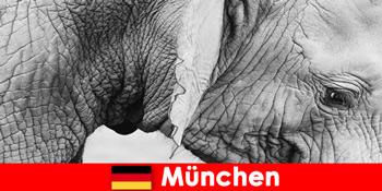 독일 뮌헨에서 가장 원래 동물원을 방문하는 방문객을 위한 특별 여행