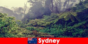 시드니 오스트레일리아를 국립공원의 인상적인 세계로 탐험